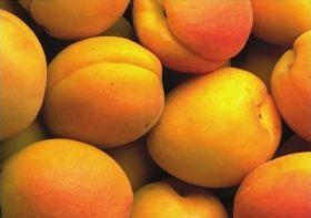 European apricot volumes to fall