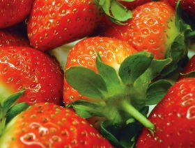 Spain sends out more strawberries