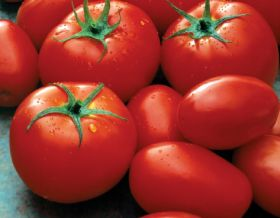 Wal-Mart backs Mexican tomato deal