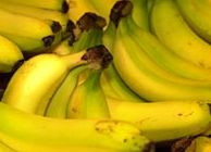 Banana producers fight black sigatoka