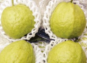 USDA approves Mexican guava imports