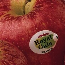 French apple exporters plan to merge