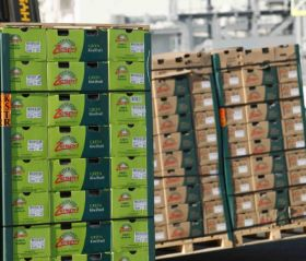 Hillfresh braced for NZ kiwifruit