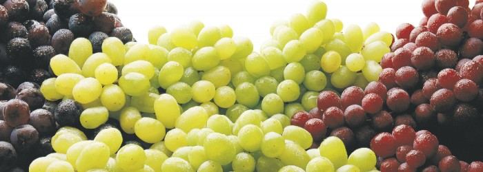 Grapes set for vintage year