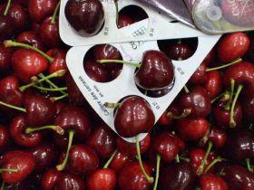 Demand for Greek cherries blooms