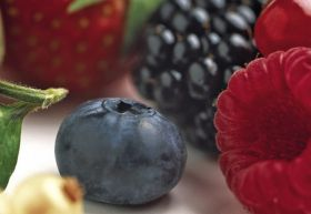 Berries leading the way on sales growth