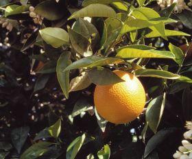 Spanish fruit exports fall