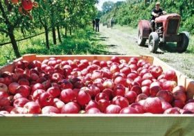 Turners and Growers to refocus on apples