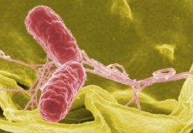 HLB acts to distance itself from Salmonella scare