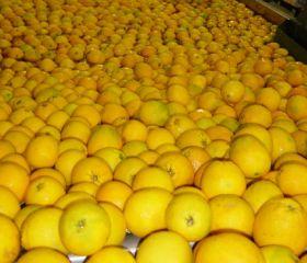 EU and South Africa air citrus concerns