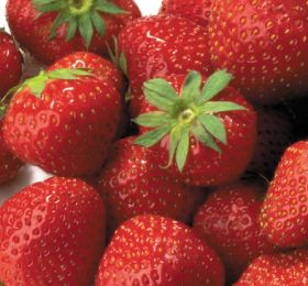 Gaza strawberries offered opening