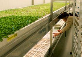 Monsanto completes De Ruiter deal
