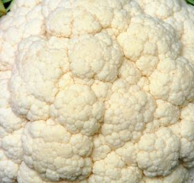Loudest 'cauliflower creak' for 24 years predicted