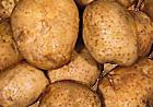 Frost cuts Indian potato crop