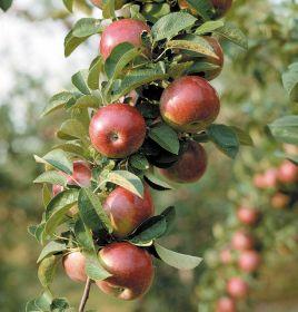 UK fresh produce production slips