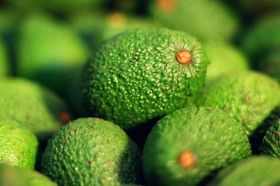Strong season for NZ avocados