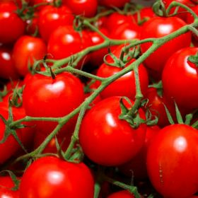 Italian processed tomato prices slump
