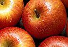 "Fuji apple ""callus hair"" growth discovery"