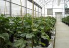 Monsanto in De Ruiter acquisition