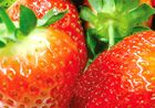 Steady growth for Italian strawberries