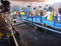 Ivory Coast: pineapples with a difference