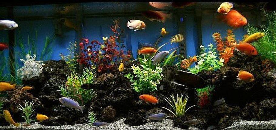 tropical tank panoramic