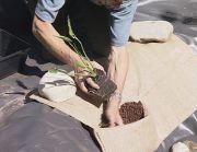 planting hessian