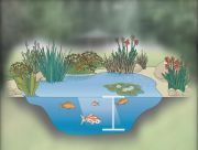 pond depth