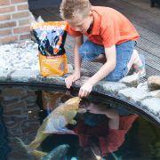 fish_feeding