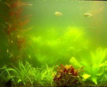 Algae Control - 5g treats 12,500 Litres