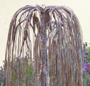 Weeping Willow in Copper Pond