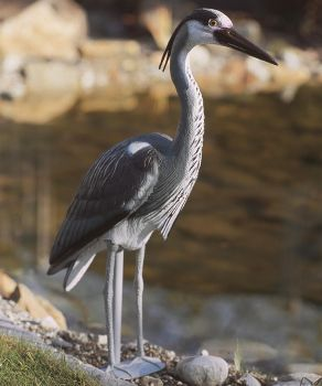 Plastic Heron Decoy for pond use