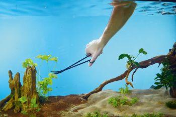 Aquarium Plant Scissors