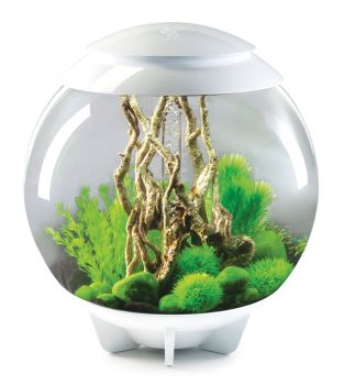 biorb halo 15 white biorb aquariums water garden uk. Black Bedroom Furniture Sets. Home Design Ideas
