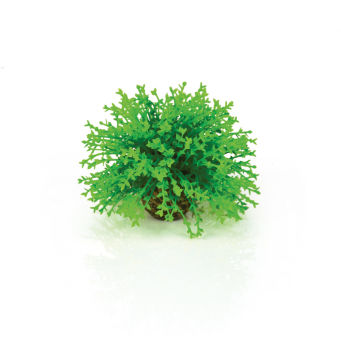 Lush Green - biOrb Decoration Pack