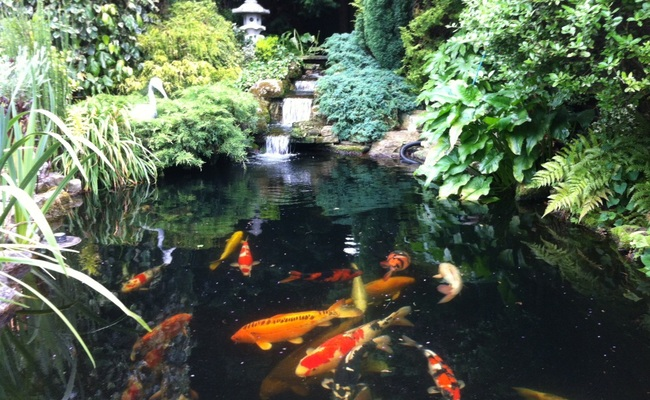 Build and installation services pond and lake water for Koi pond builders uk